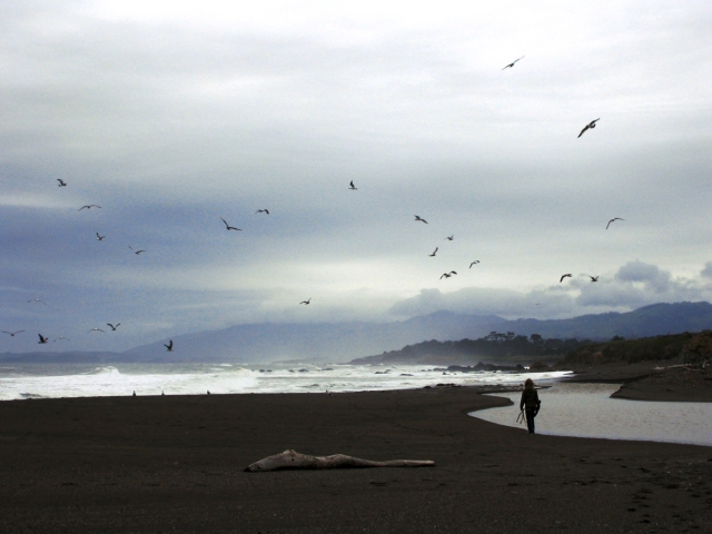 Cambria shore 2006 007