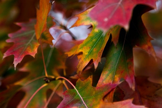 The Autumn Leaves copy